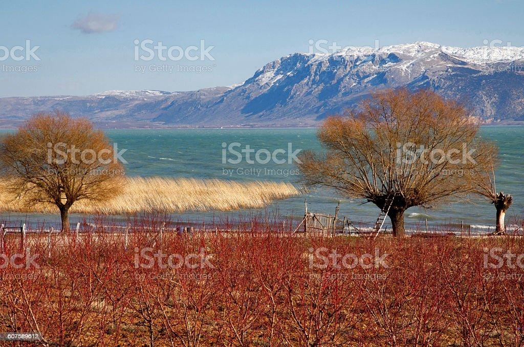 orchard located near the Egirdir Lake. stock photo