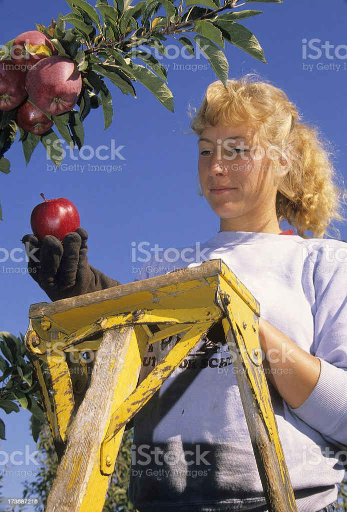 Orchard owner holding Red Delicious apple stock photo