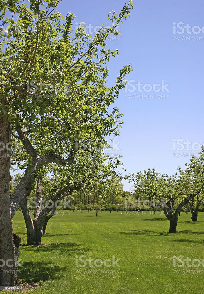 Orchard royalty-free stock photo