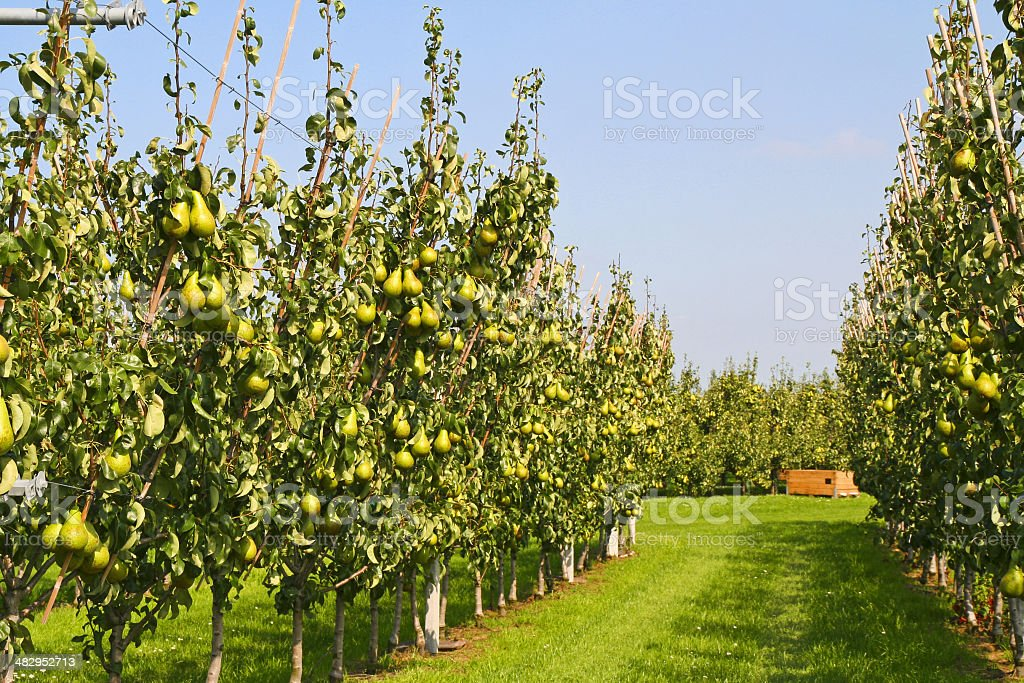 Orchard # 55 stock photo