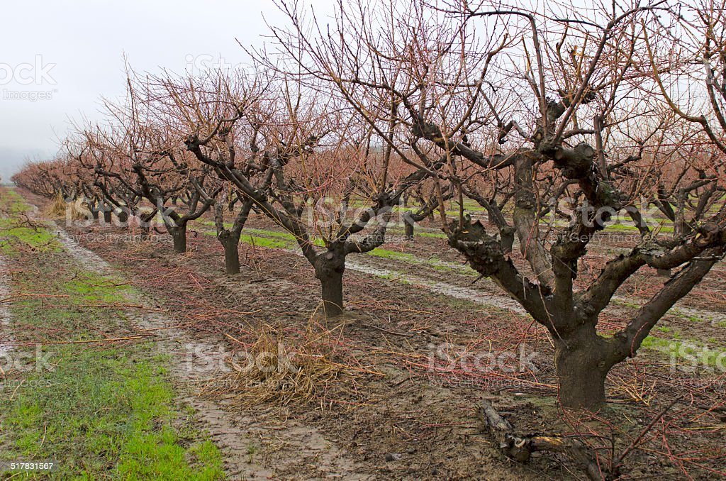 Orchard stock photo