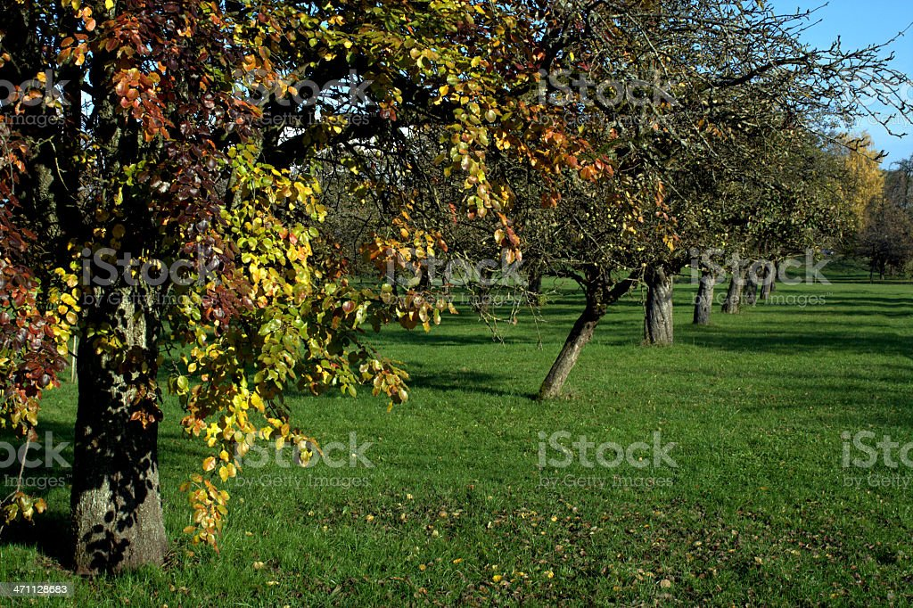 Orchard with Autumn Colors royalty-free stock photo