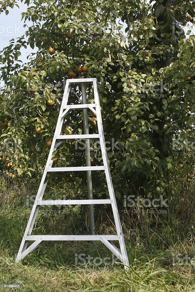 orchard with fruit tree and ladder royalty-free stock photo