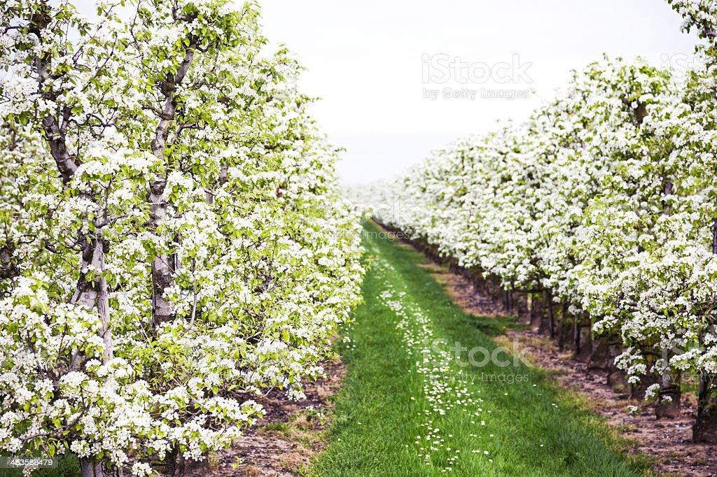 Orchard # 132 XXL royalty-free stock photo