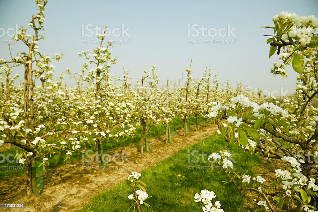 Orchard # 58 XXXL stock photo
