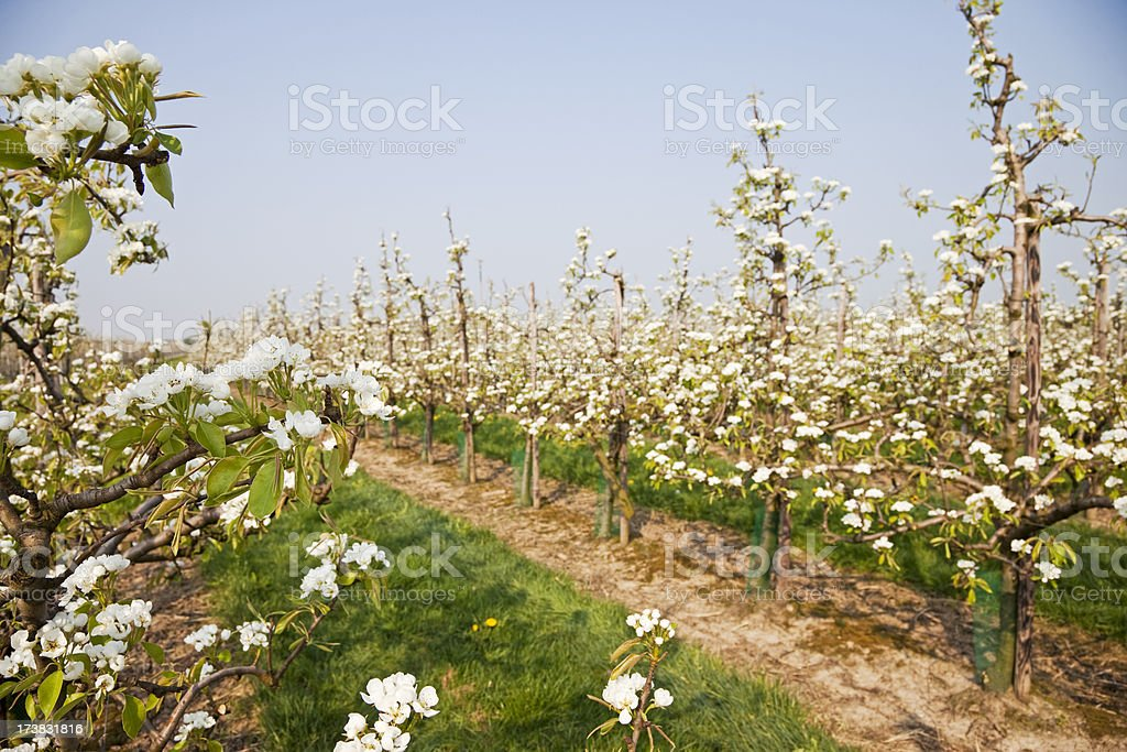 Orchard # 59 XXXL stock photo