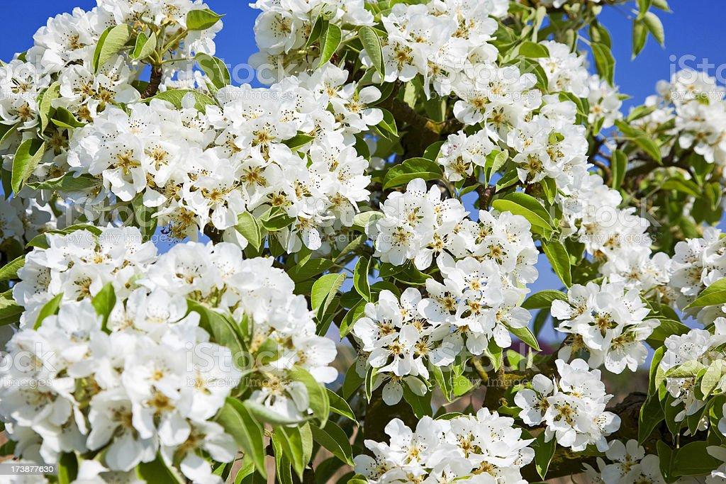 Orchard # 61 XXXL royalty-free stock photo