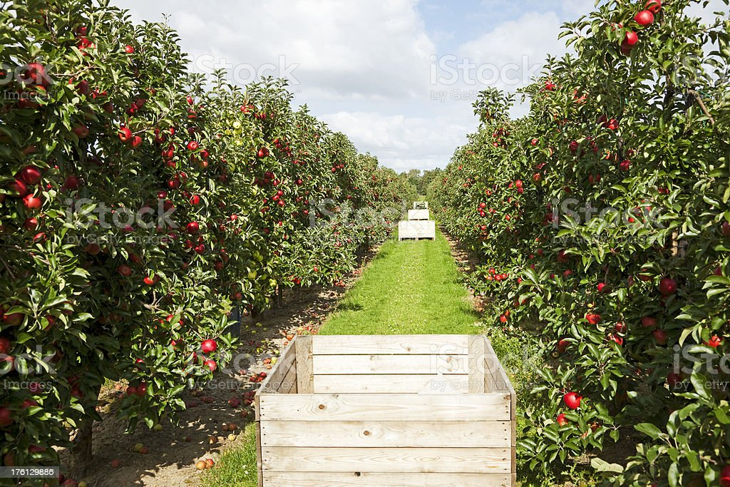 Orchard # 61 XXXL stock photo