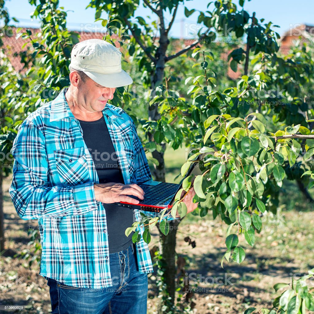 Orchardman Planning stock photo