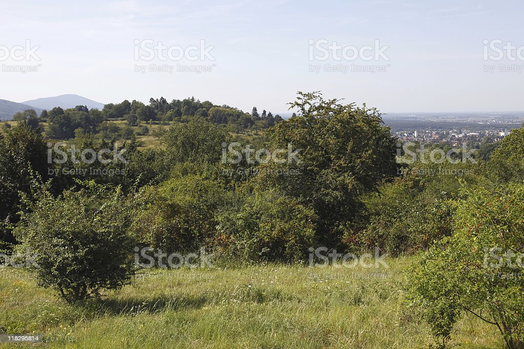 Orchards above Eberstadt royalty-free stock photo