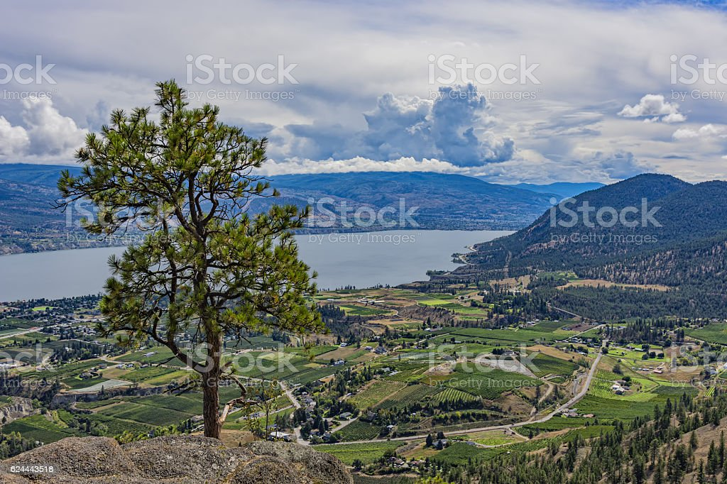 Orchards and Okanagan Lake near Summerland British Columbia Canada stock photo