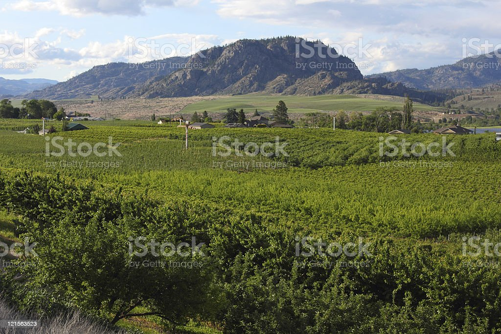 Orchards in Osoyoos, British Columbia stock photo