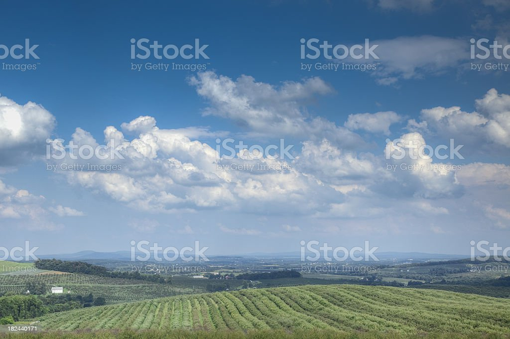 Orchards in the Summer stock photo