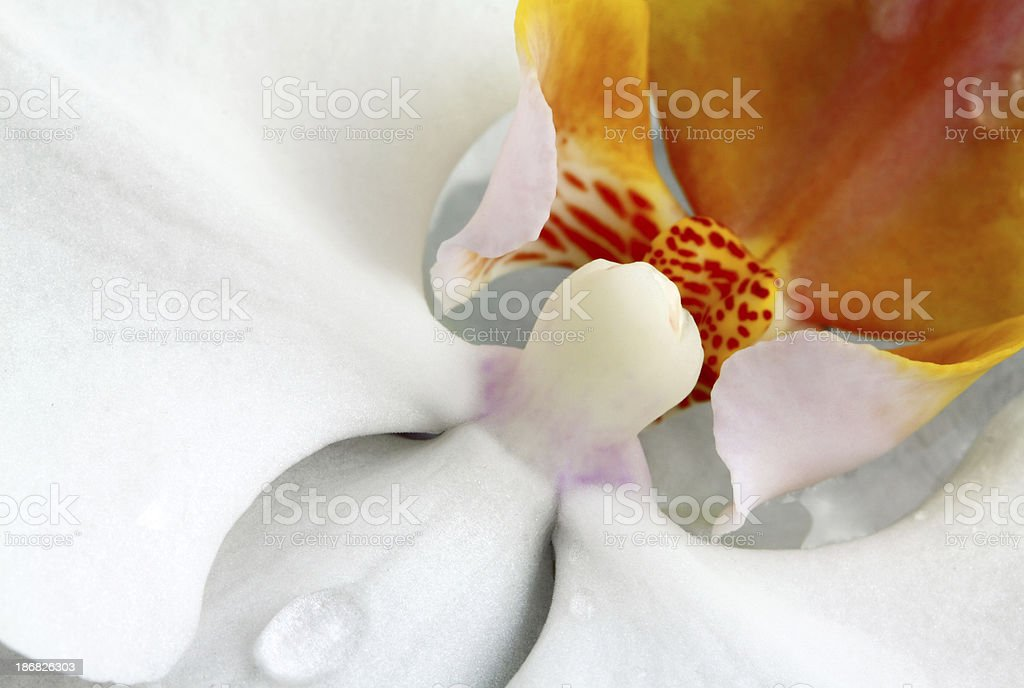 Orchid Abstract stock photo