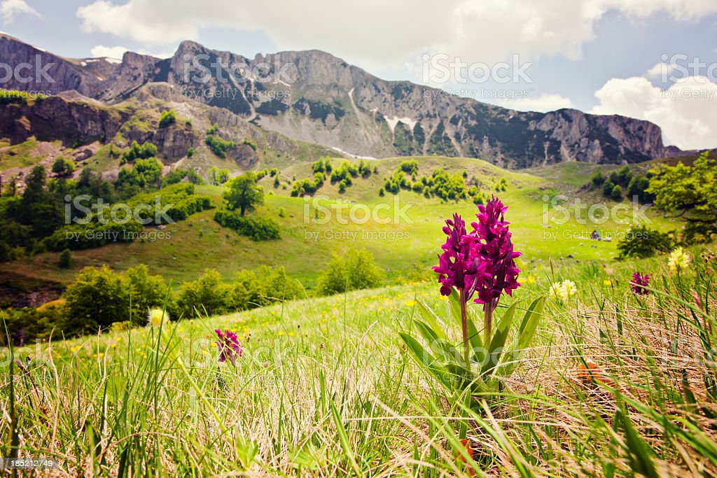 Orchid against rolling hills and mountain backdrop stock photo