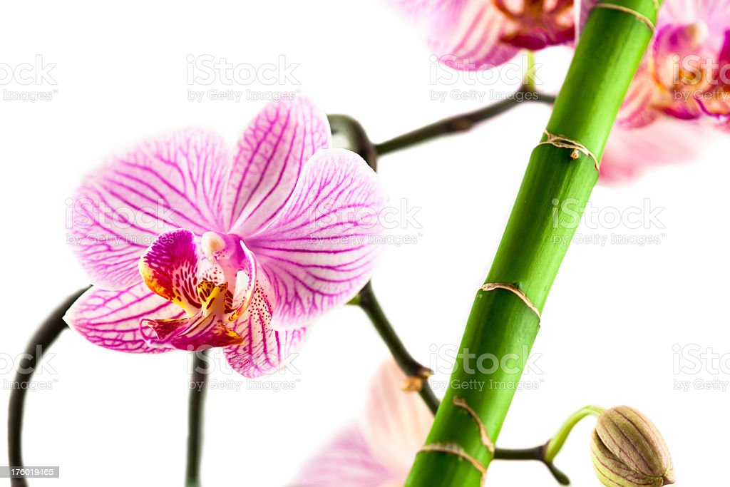 Orchid and bamboo royalty-free stock photo