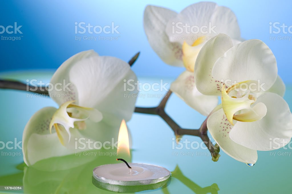 Orchid and floating candle stock photo