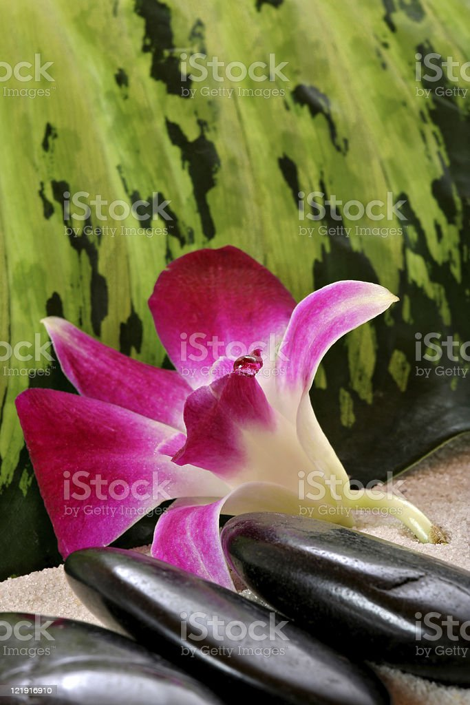 orchid and massage stones stock photo