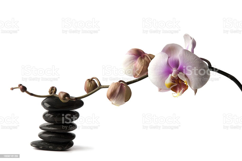 Orchid and stones. royalty-free stock photo