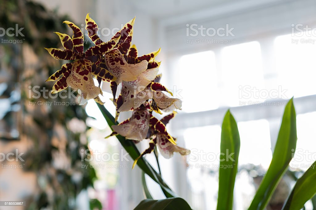 orchid and window stock photo