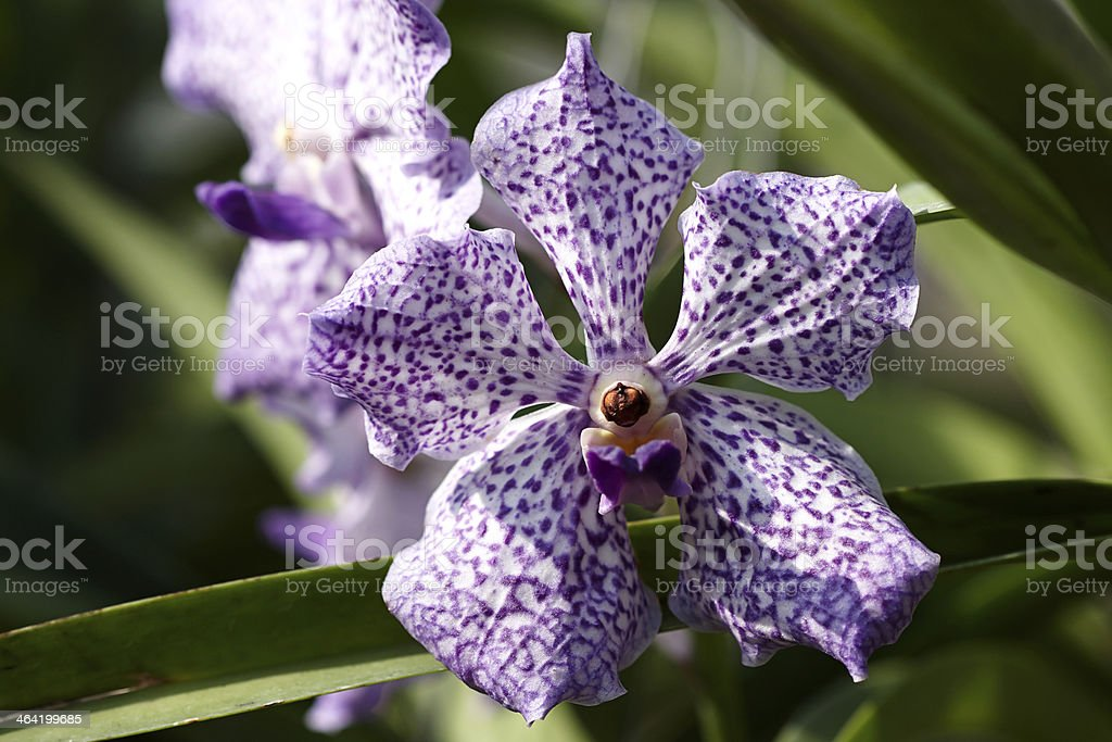 Orchid blooming in garden stock photo