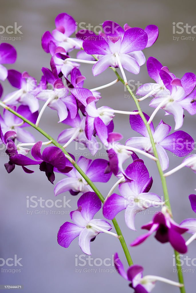 Orchid Collection stock photo