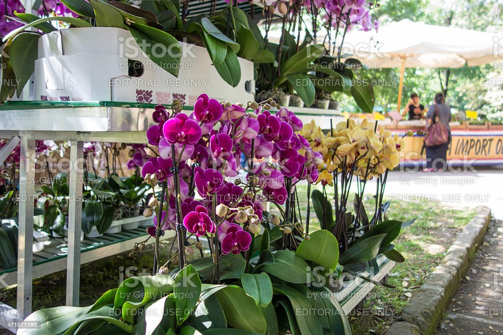 Orchid exhibition in Naples stock photo