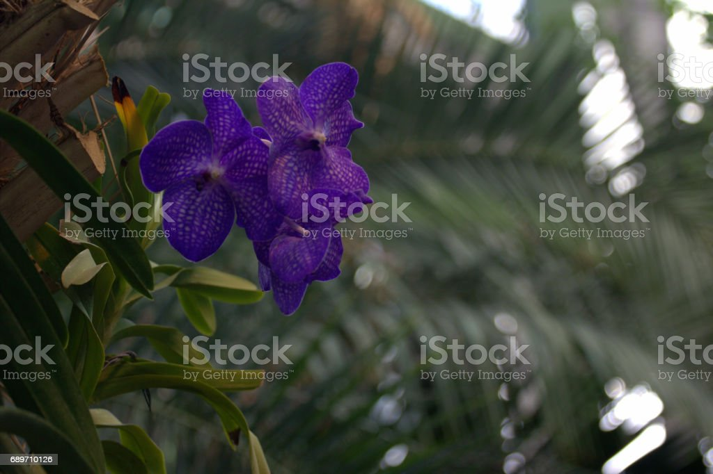 Orchid flower in the greenhouse stock photo