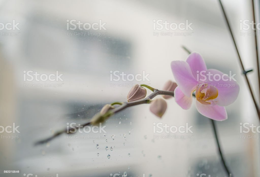 Orchid flower near window stock photo