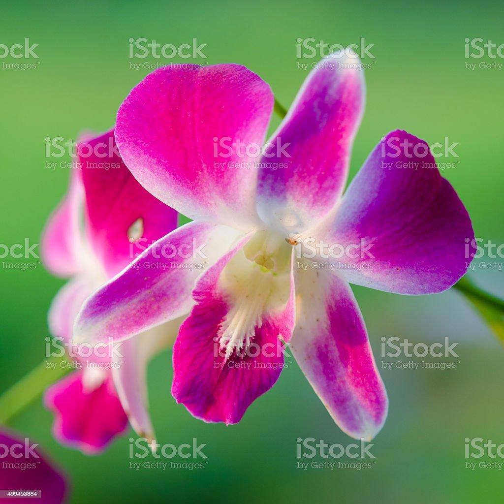 Orchid flower on green background stock photo