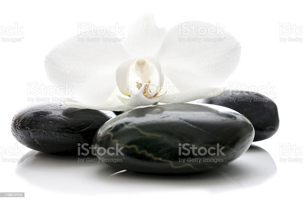 Orchid flower on zen stones stock photo