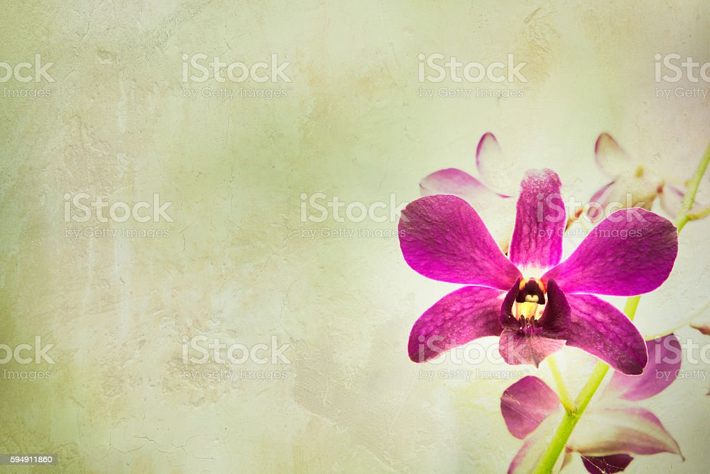 Orchid flower with vintage background. stock photo