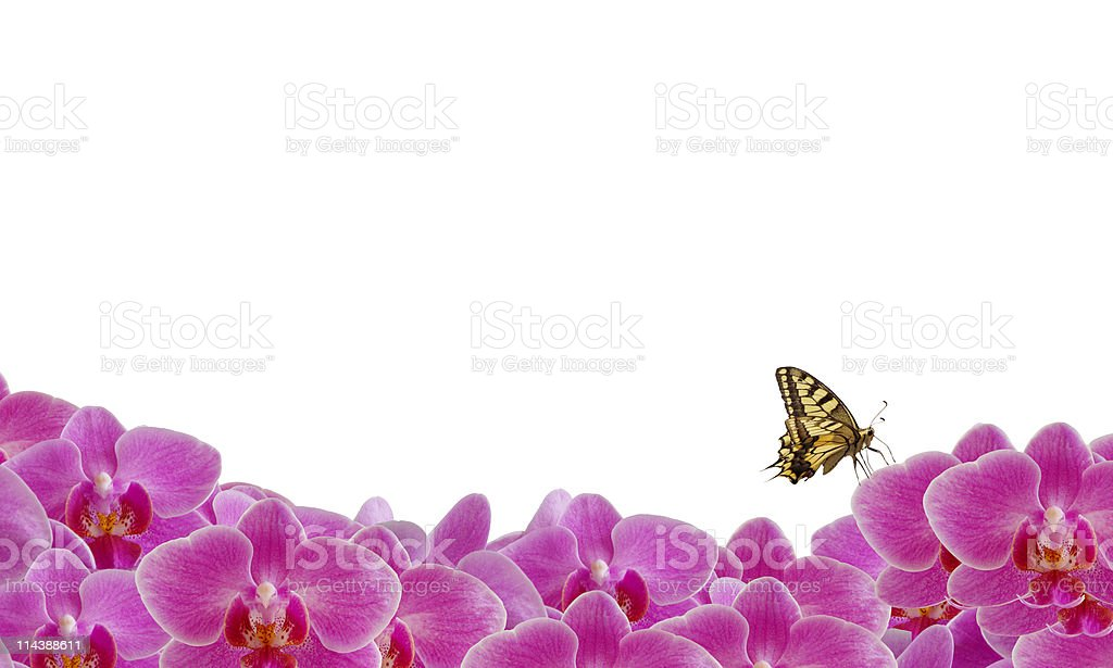 Orchid Flowerbed and Butterfly XXL stock photo