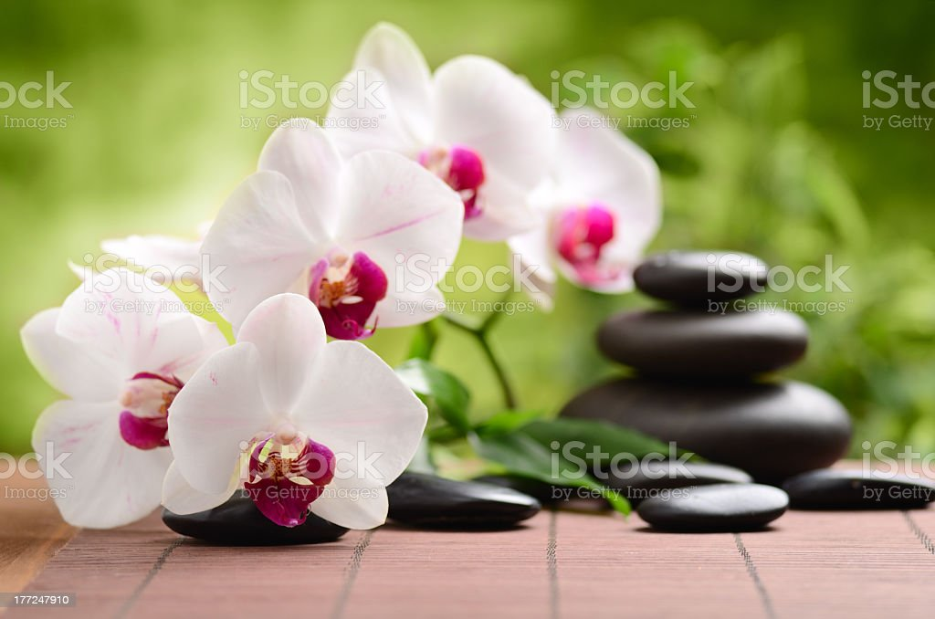 Orchid flowers and smooth black stones on a tiled surface royalty-free stock photo