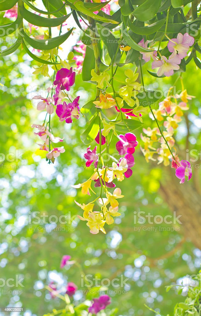 Orchid flowers in rain forest stock photo