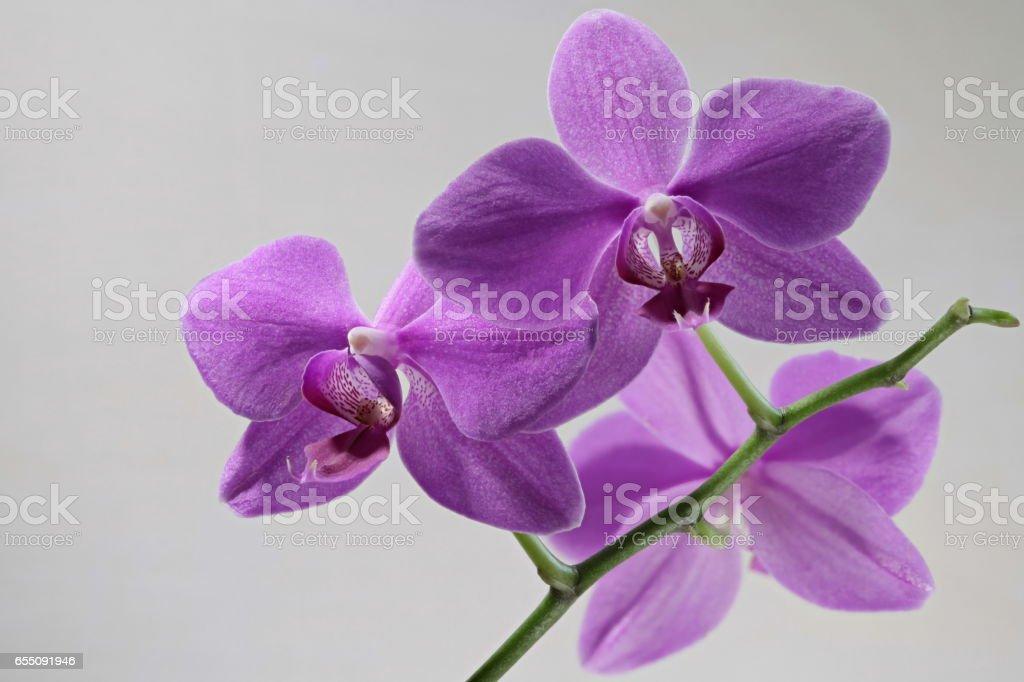 orchid flowers macro shot stock photo