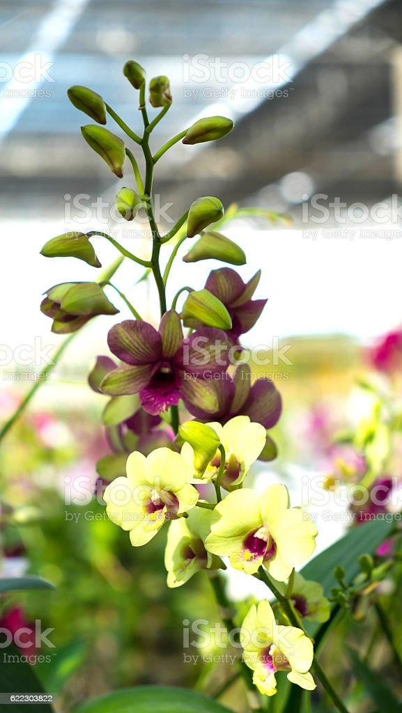 Orchideen Blumen  Lizenzfreies stock-foto