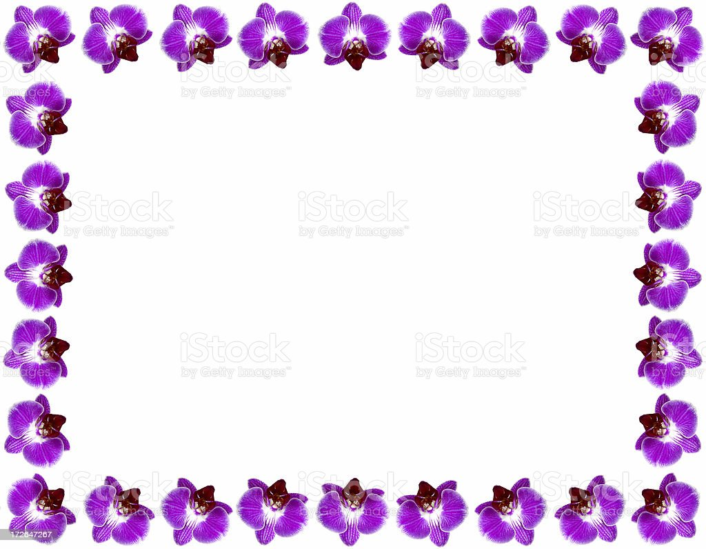 Orchid  frame royalty-free stock photo