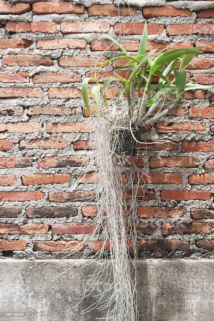 hang орхидей на желтом фоне кирпичной стены Стоковые фото Стоковая фотография