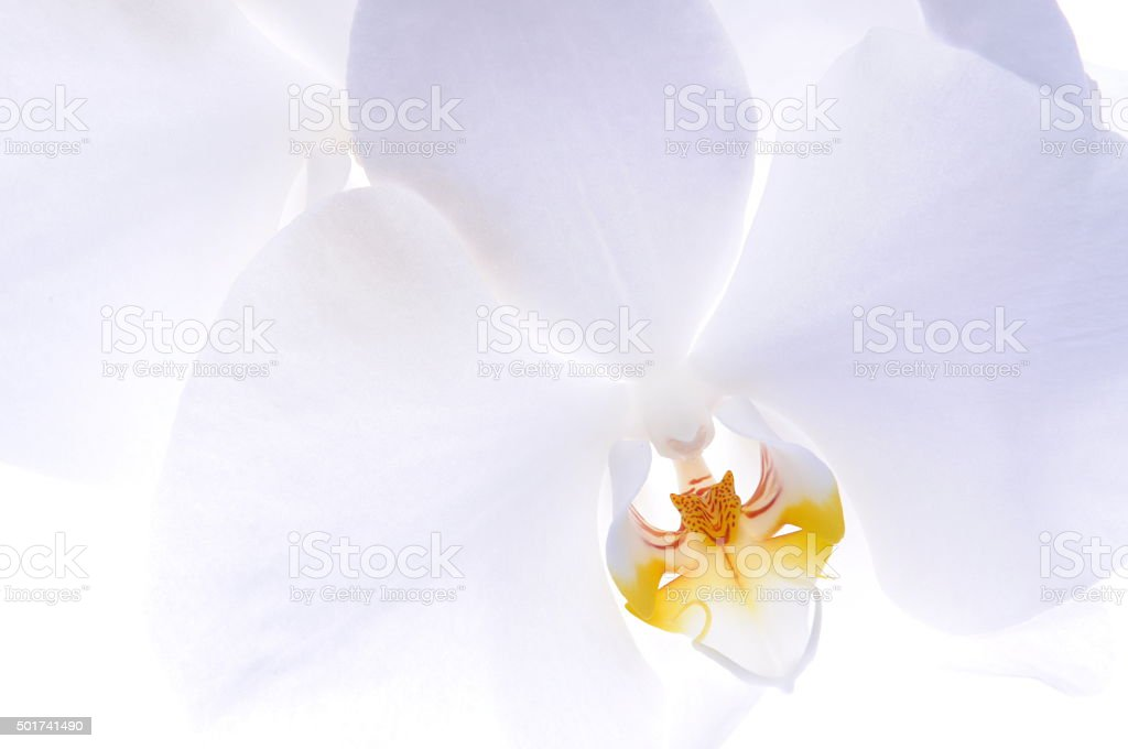 Orchid head flower stock photo