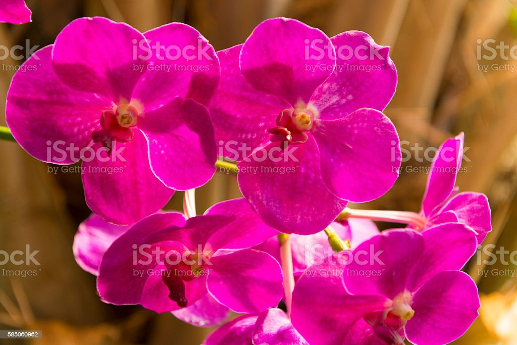 Orchid in a garden stock photo