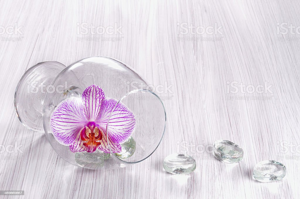 Orchid in a glass royalty-free stock photo