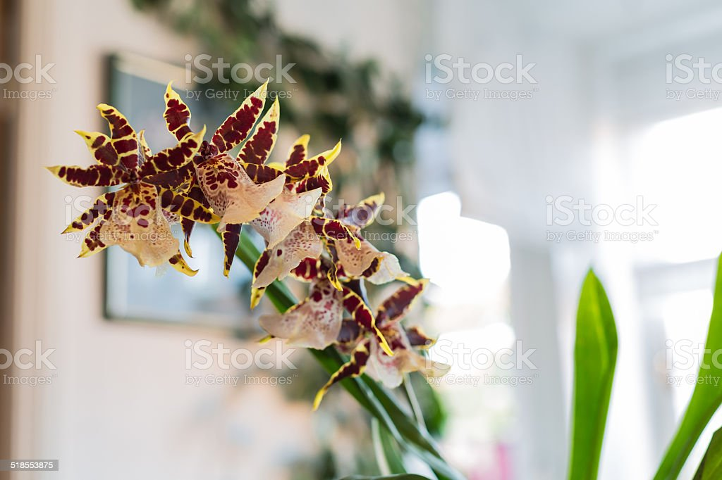orchid in domestic flat stock photo