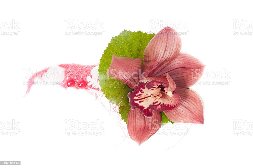 Orchid in studio royalty-free stock photo