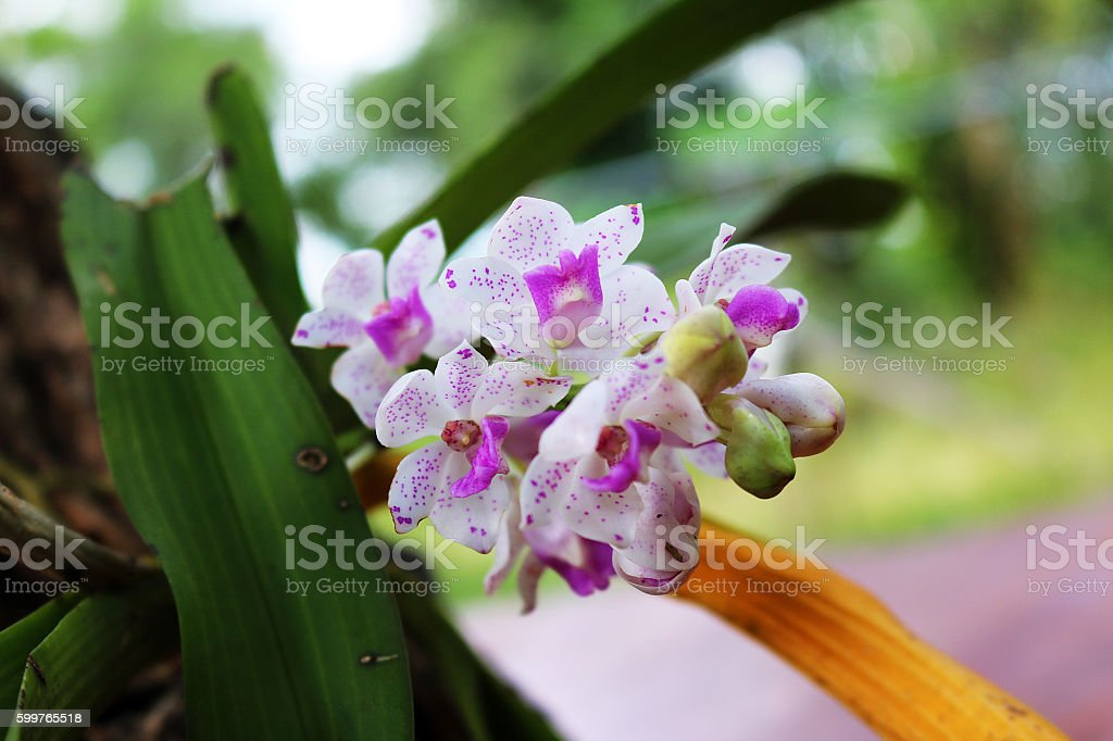 Orchid in the garden. stock photo