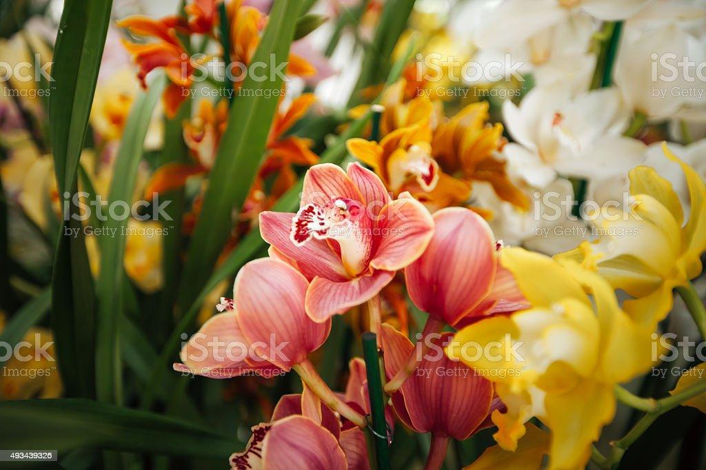 Orchid na área da estufa, foto royalty-free