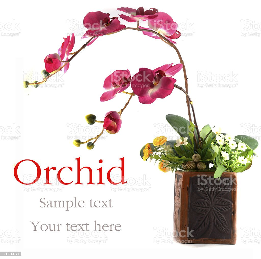 orchid in vase royalty-free stock photo