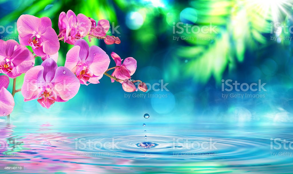 orchid in zen garden with dew on pond stock photo