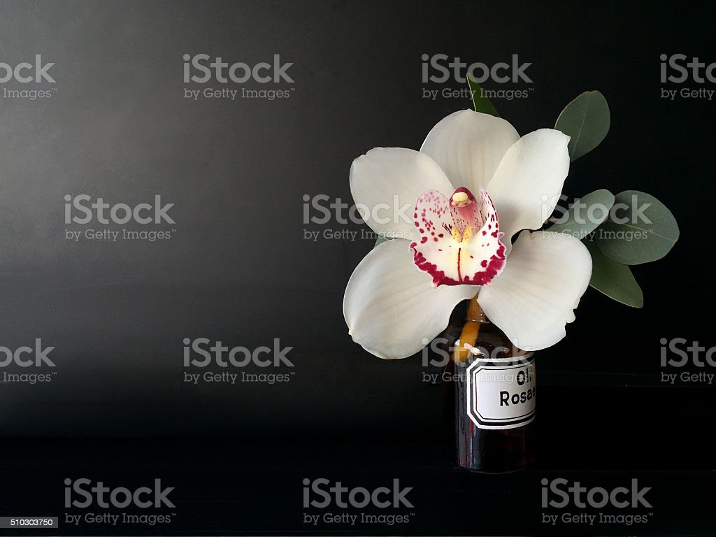 orchid isolated over black background stock photo
