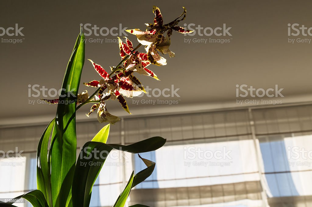 orchid lit by sun stock photo